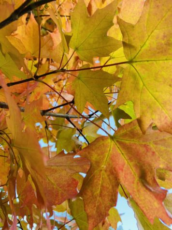 Autumn: The Nostalgic Undertone of the Season of Pumpkin Spice and Changing Colors